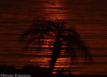 日食写真byKUWA
