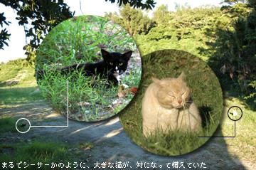 Hama_cats